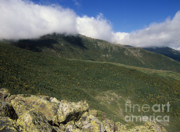 Alpine Zone Photos - Gulf of Slides - White Mountains NH  by Erin Paul Donovan