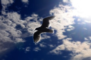 Tern Originals - Gull Against Sky Fractal by Lawrence Christopher