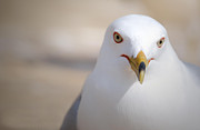 Bird At Sea Photos - Gull by By Laura Zenker/SinglEye Photography