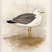 Shorebird Paintings - Gull by Nancy Patterson