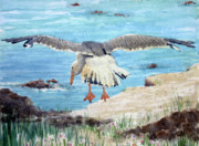 Flying Seagull Painting Framed Prints - Gull on the Washington coast Framed Print by Stephen Boyle
