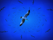 Bird At Sea Photos - Gull Sky by Don Kemper