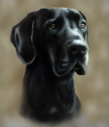 Great Dane Art - Gulliver by Barbara Hymer