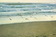 Gulls Flying Print by Jill Ferry