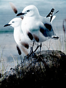 Sea Watch Prints - Gulls Print by Karen Lewis