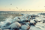 Flock Of Bird Art - Gulls Over Sea by Crfoto