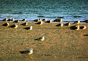 Beach - Gulls by Timothy Bulone