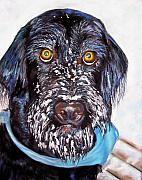 Black Dogs Framed Prints - Gus Framed Print by Frances Marino