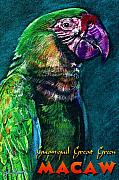 John Keaton Art - Guyaquil Great Green Macaw by John Keaton