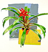 Bromeliad Mixed Media Posters - Guzmania  Poster by Cliff Spohn