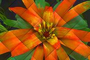 Bromeliad Digital Art Prints - Guzmania Ultra Print by Manny Lorenzo
