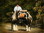 Carriage Team Framed Prints - Gypsies Driving Framed Print by Terry Kirkland Cook