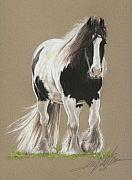Equine Pastels Framed Prints - Gypsy Horse Paddy Framed Print by Terry Kirkland Cook
