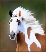 Gypsy Vanner Digital Art - Gypsy Vanner by Tom Schmidt
