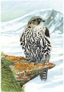Gyrfalcon  Metal Prints - Gyrfalcon Metal Print by Dag Peterson