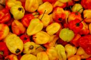 Hot Peppers Originals - Habaneros by Sharon Blanchard