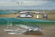 North Sea Drawings - Habitat common seals  - Pinnipeds - Marine Mammals - mudflat tideland - Phoque commun-Banc de Sable  by Urft Valley Art