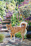 Shibuya Paintings - Hachiko in the Garden by David Lloyd Glover