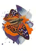 Insects Pastels - Hackberry Emperor Butterfly by Janice Lawrence
