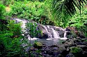 Frond Prints - Hahalawe Falls Maui Print by Kevin Smith