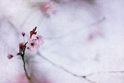 Cherry Blossom Metal Prints - Haiku Two Metal Print by Rebecca Cozart
