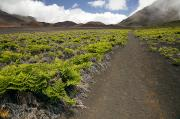 Gravel Road Photos - Haleakala Hiking Trail by Jenna Szerlag