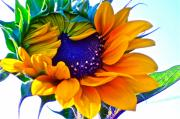 Sunflowers Art - Half-Awake by Gwyn Newcombe