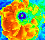 Computer Generated Flower Prints - Half On Fire  Print by Kim Galluzzo-Wozniak