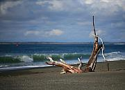 Mike Coverdale - Halfmoon Bay Driftwood