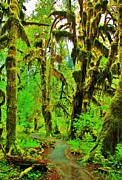 Olympic National Park Prints - Hall of Moss Print by Benjamin Yeager