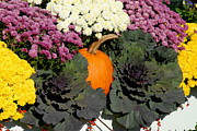 Autumn Photographs Prints - Halloween 107 Print by Joyce StJames