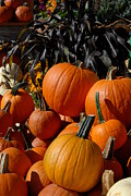 Autumn Photographs Prints - Halloween 108 Print by Joyce StJames