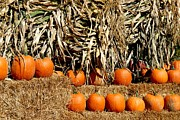 Autumn Photographs Prints - Halloween 98 Print by Joyce StJames