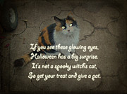 Mother Nature Photos - Halloween Calico Cat and Poem Greeting Card by Mother Nature