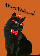 Mother Nature Photos - Halloween Card - Black Cat Ready to Party by Mother Nature