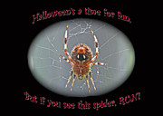 Marbled Orb Weaver Posters - Halloween Card - Marbled Orb Weaver Spider Poster by Mother Nature