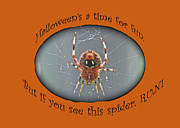 Marbled Orb Weaver Posters - Halloween Greeting Card - Marbled Orb Weaver Spider Poster by Mother Nature