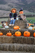 Pumpkin Patch Photos - Halloween Pumpkin Patch 7D8476 by Wingsdomain Art and Photography