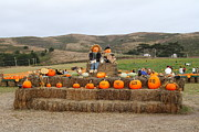 Pumpkin Patch Photos - Halloween Pumpkin Patch 7D8478 by Wingsdomain Art and Photography