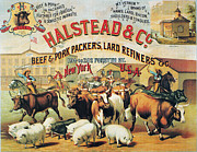 Steer Framed Prints - Halstead & Co., 1886 Framed Print by Granger
