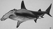 Sharks Painting Metal Prints - Hammerhead Shark Metal Print by Nick Flavin