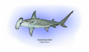 Shark Drawings - Hammerhead shark by Ralph Martens