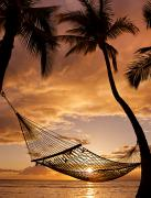 Attach Prints - Hammock Between Palms II Print by Quincy Dein - Printscapes