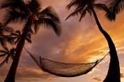 Attach Prints - Hammock Between Palms IV Print by Quincy Dein - Printscapes