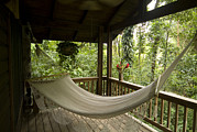 Hanging Pot Framed Prints - Hammock Hanging On A Porch Framed Print by Richard Nowitz