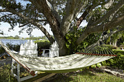 Empty Chairs Prints - Hammock Under a Tree Print by Skip Nall
