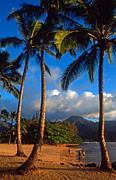 Tropical Prints Prints - Hanalei Bay Palms Print by Kathy Yates