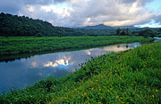River Prints Posters - Hanalei River Reflections Poster by Kathy Yates
