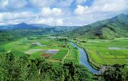 Culture Influenced Art Prints - Hanalei Valley Taro Field Print by Greg Vaughn - Printscapes