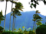 Coconut Palms Prints - Hanalei Waterfalls Kauai Print by Kevin Smith